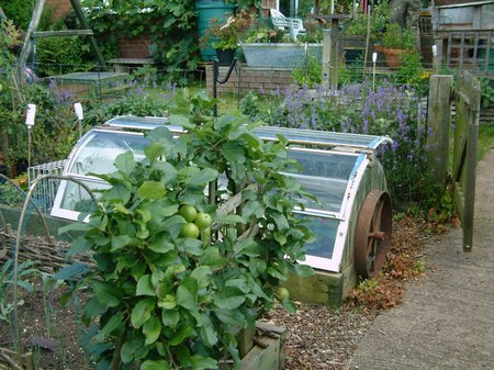 The Main Points Of Sustainable Gardening