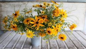 Rudbeckia: Beautiful Fall Garden Plant