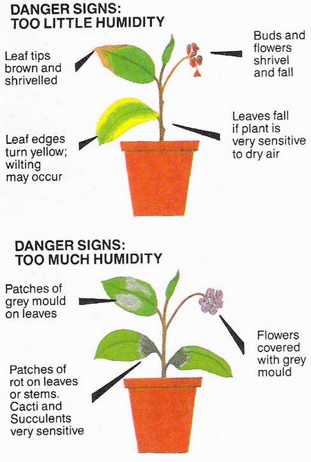 how to make humidity tray for plants