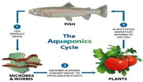 Grow Your Organic Garden Using Aquaponics