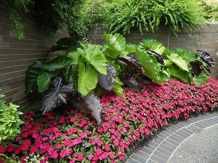 useful ground cover plants  .coolgarden, Natural flower