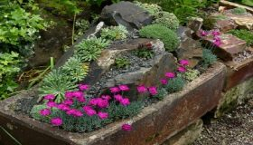 Decorative Containers: Sink Garden