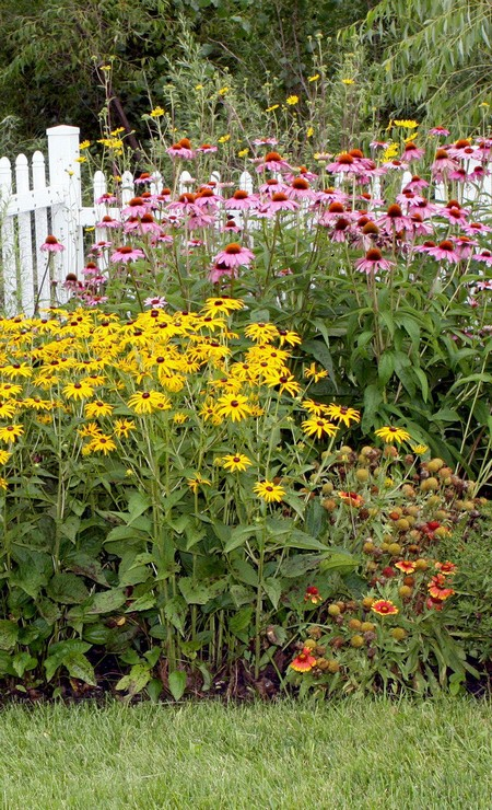 August in the flower garden for August garden designs
