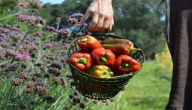 Garden Jobs In September