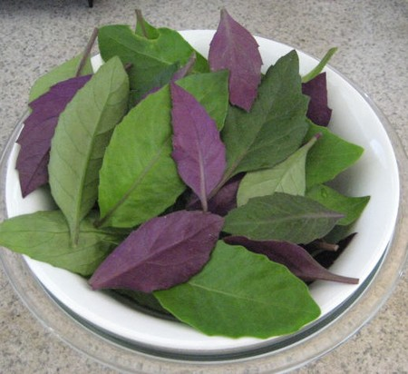 bay leaf essay Tips and recipes for growing and using sweet bay leaf.