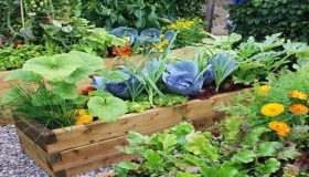 What Is Organic Companion Planting?