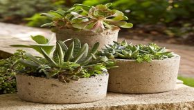 Planting In Hypertufa Containers