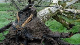 Sign And Symptoms Of Common Tree Diseases