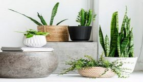 Where To Put Your Indoor Pot Plants?
