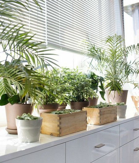 Indoor-plants3