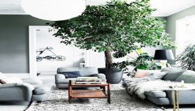 The Best Indoor Trees