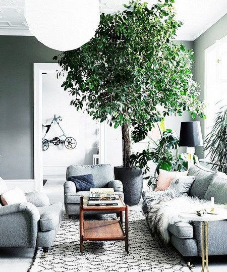 Genial If You Like Big Bold Statements Youu0027ll Want A Fiddle Leaf Fig Tree In Your Living  Room. These Trees Have Large Sculptured Leaves That Give The Air Of The ...
