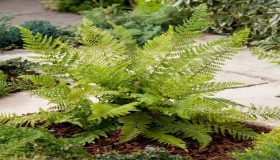 Gardening With Fern Plants