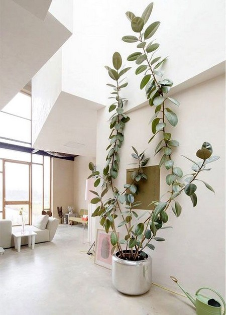 Indoor-plants10