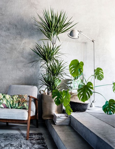 Large Indoor Plants | www.coolgarden.me