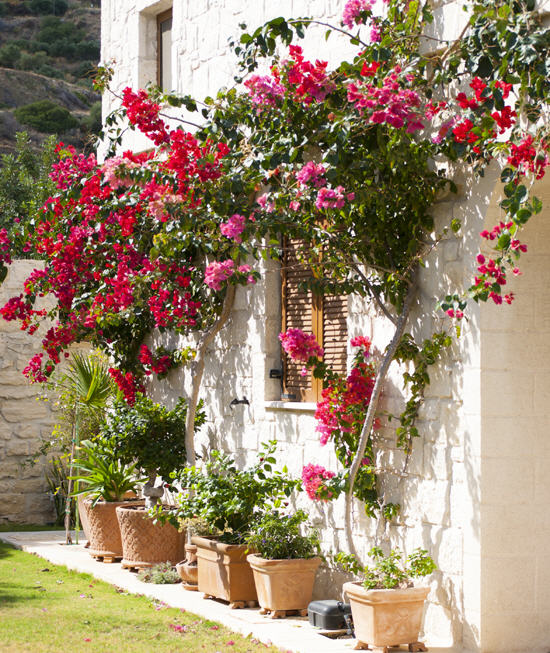 Planting Climbers In Mediterranean Gardens