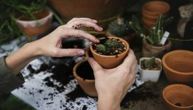 8 Great Reasons to Quit Your Job and Become a Full-Time Independent Gardener