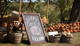 Why Your Pumpkin Farm Needs A Steel Building