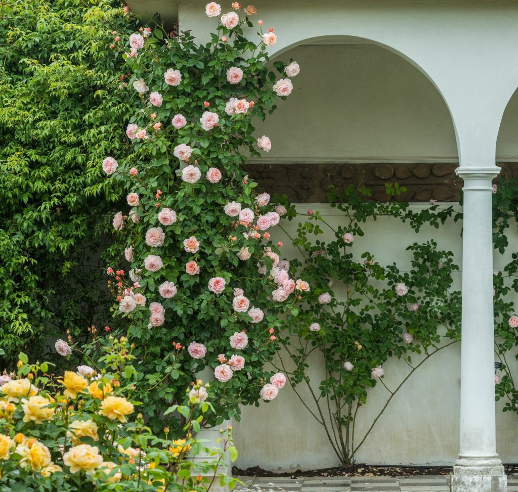 How To Create A Beautiful Rose Garden