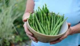 Natural Gardening Ways For Growing Beans