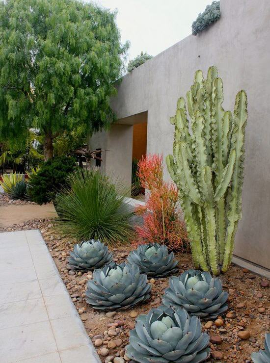 Desert Gardening Create Your Summer Garden In The Desert