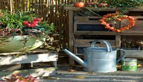 Fall Season Gardening: Looking After The Plants