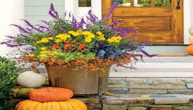 Choosing Plants For Fall Colorful Garden