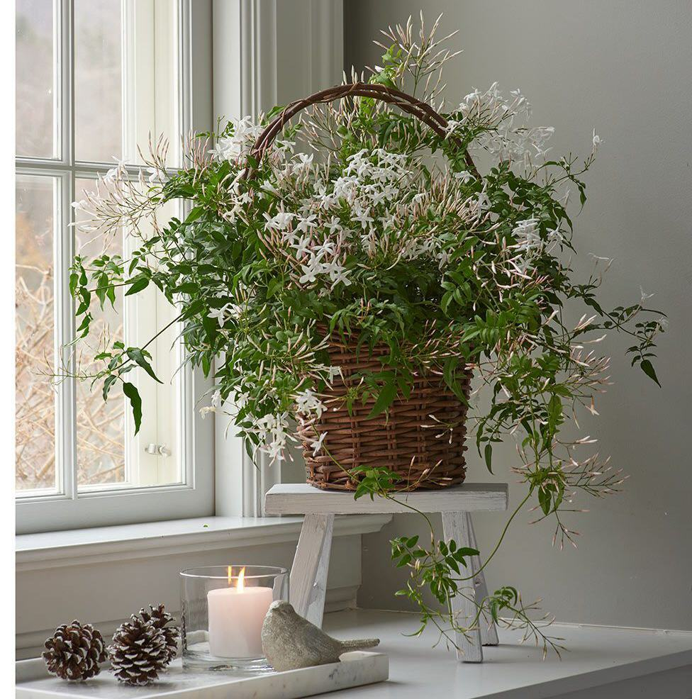 Freshen Up Your Home With Fragrant Indoor Plants