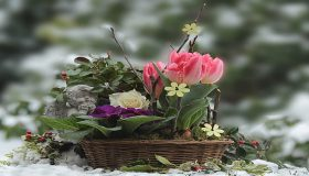 Winter-Flowering Plants In December Garden