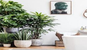 The Best Plants For Shades