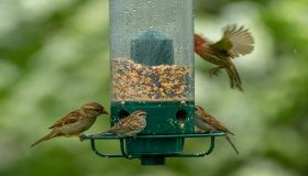 How to Feed the Wild Birds in Your Garden