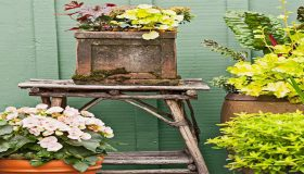 Year-Round Container Gardens: Designing Tips