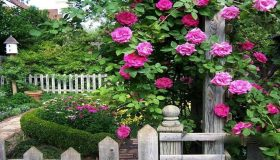 Growing Rose Gardens