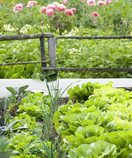 Space Saving Gardening Methods For A Small Vegetable Gardens