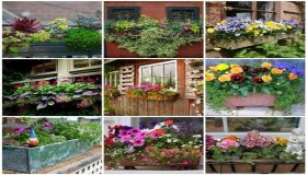 Flowering Plants In Your Windows